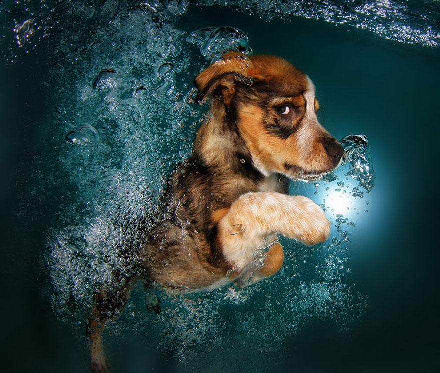 underwater-puppies-seth-casteel03