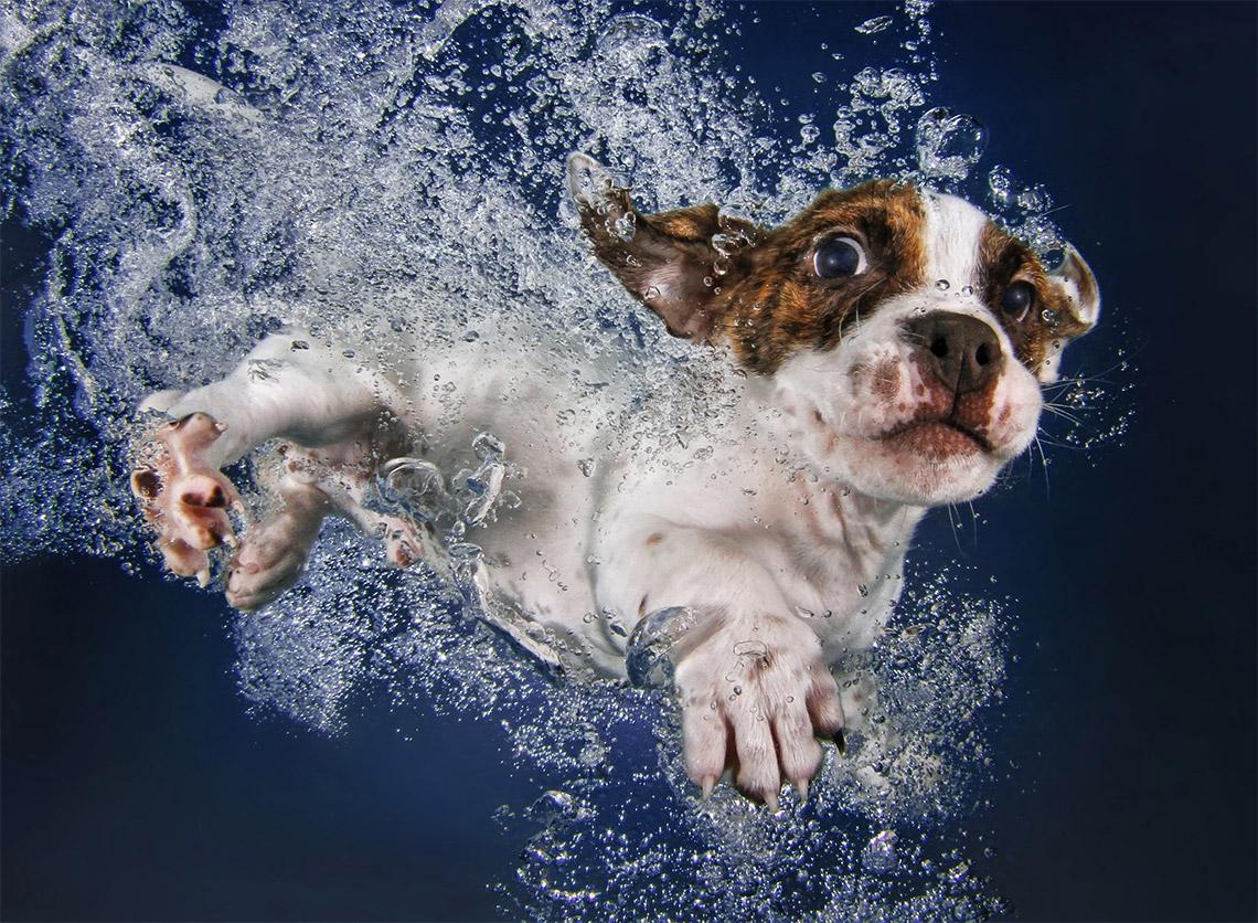 underwater-puppies-seth-casteel05
