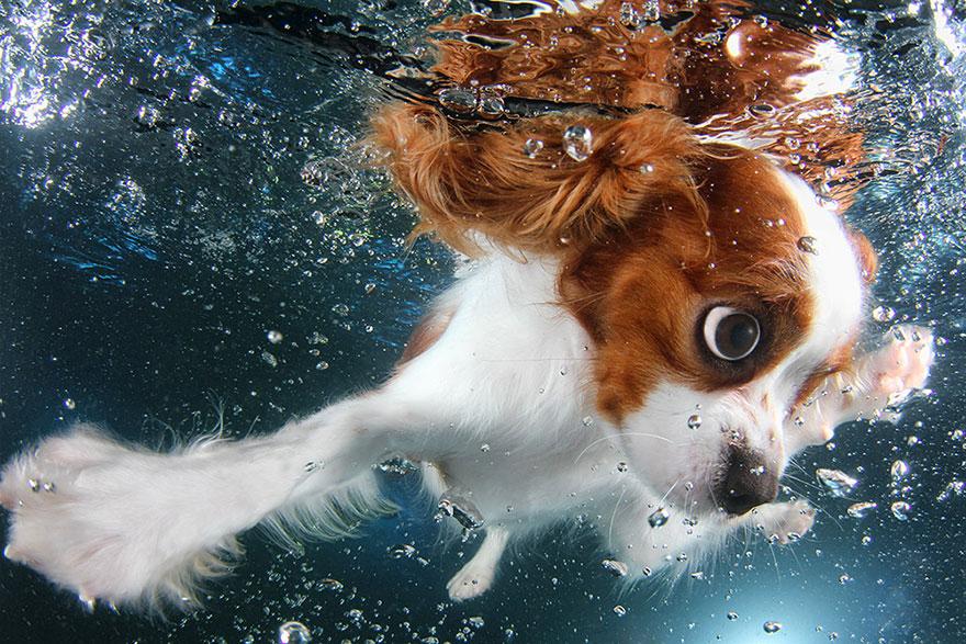 underwater-puppies-seth-casteel07
