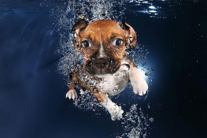 underwater-puppies-seth-casteel09
