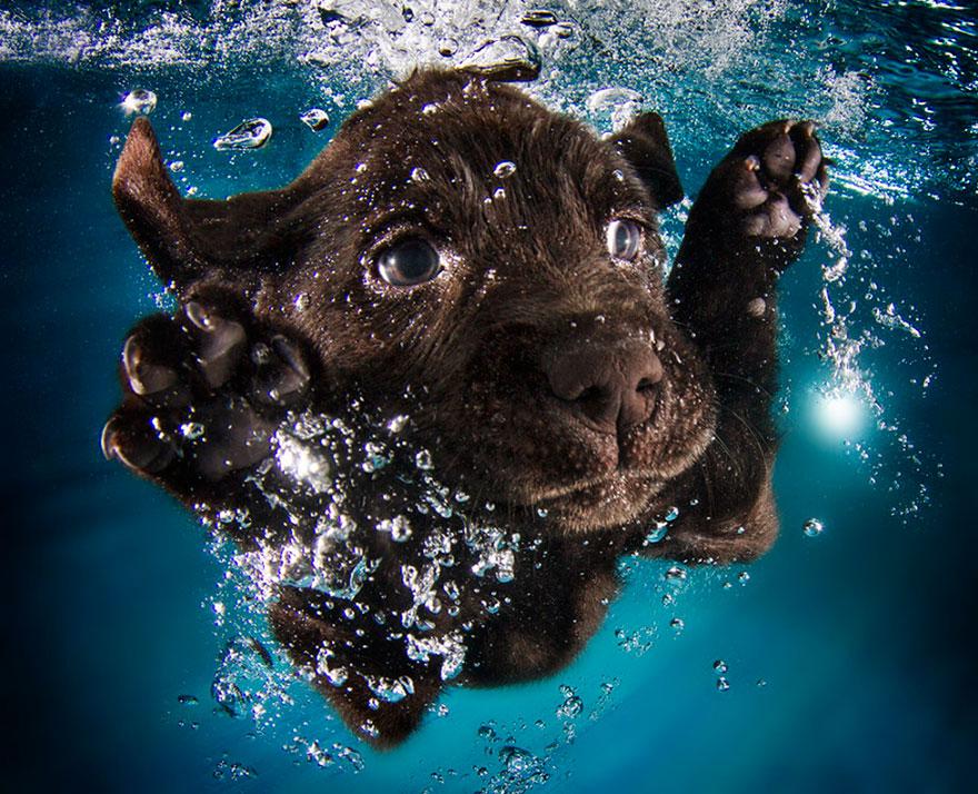 underwater-puppies-seth-casteel10