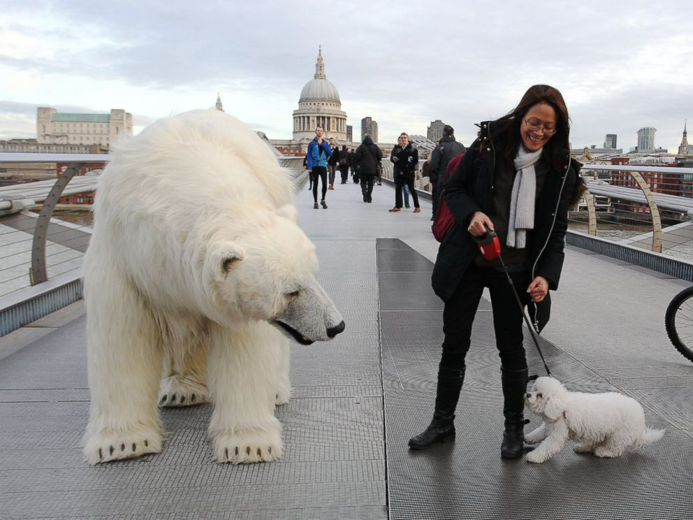 polarbear_london_fortitude_01