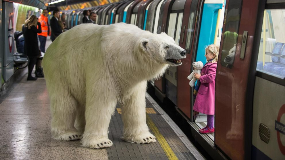 polarbear_london_fortitude_02