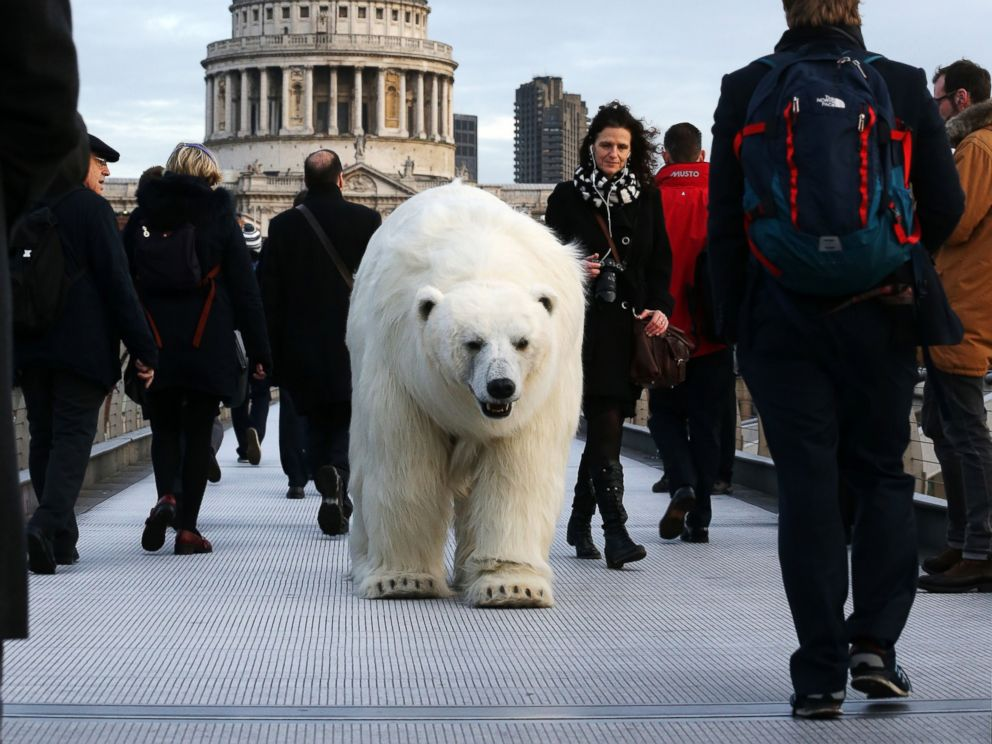 polarbear_london_fortitude_03