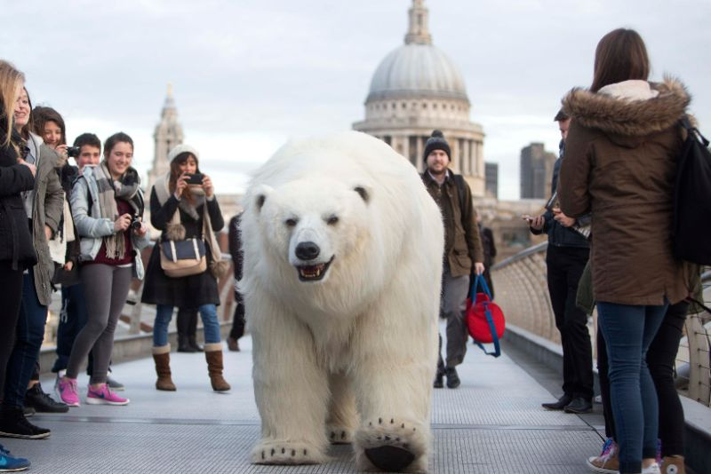 polarbear_london_fortitude_04