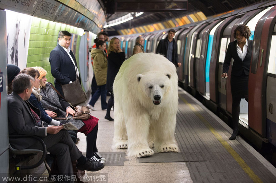 polarbear_london_fortitude_05