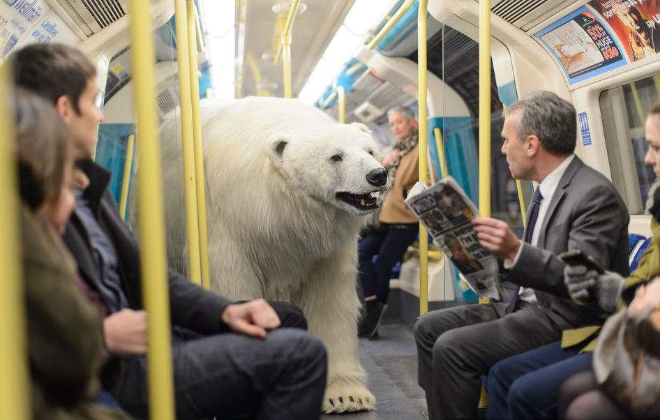 polarbear_london_fortitude_10