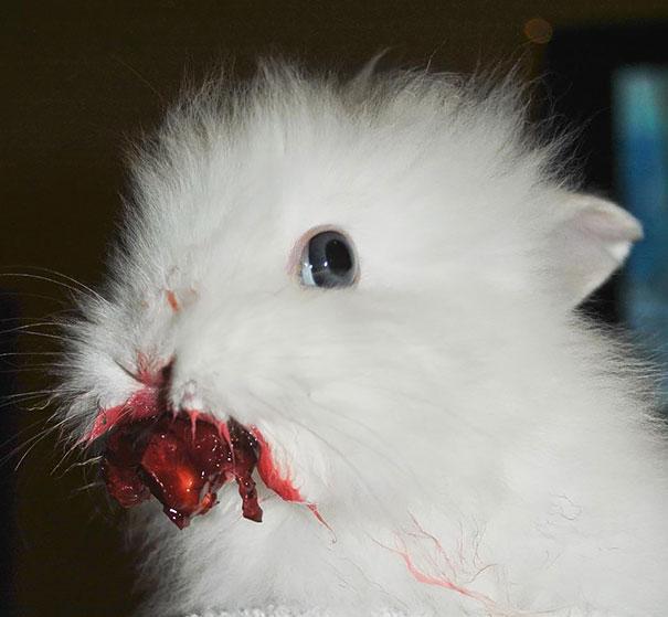 animals-eating-berries-01