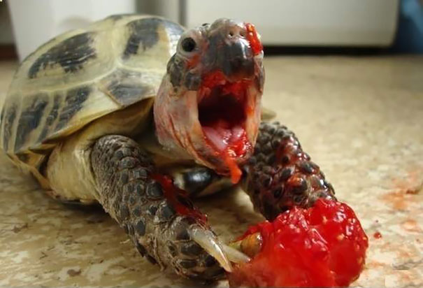 animals-eating-berries-02