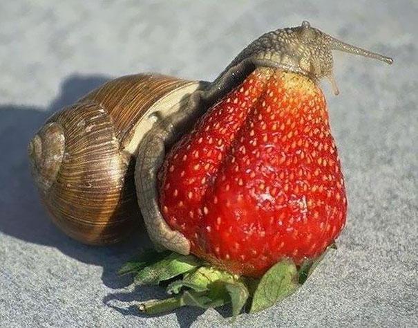 animals-eating-berries-03