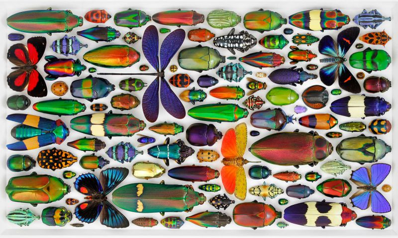 christopher_marley_insect_mosaics_10