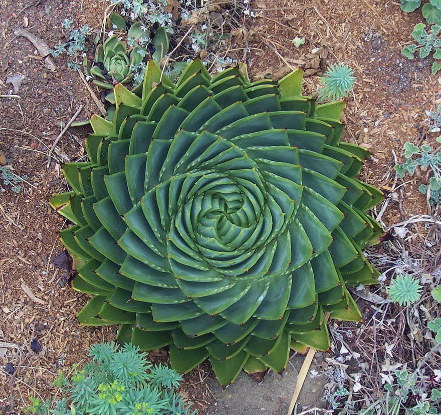 geometric-plants-01