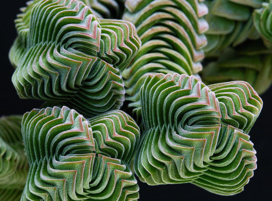 geometric-plants-04