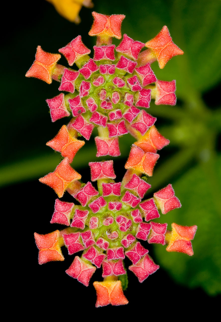 geometric-plants-06