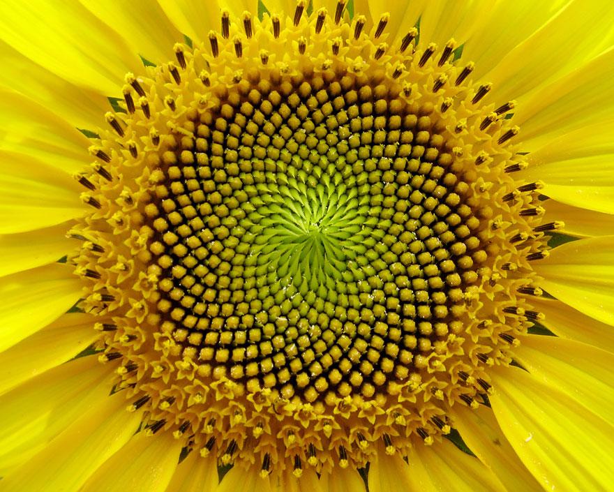 geometric-plants-10