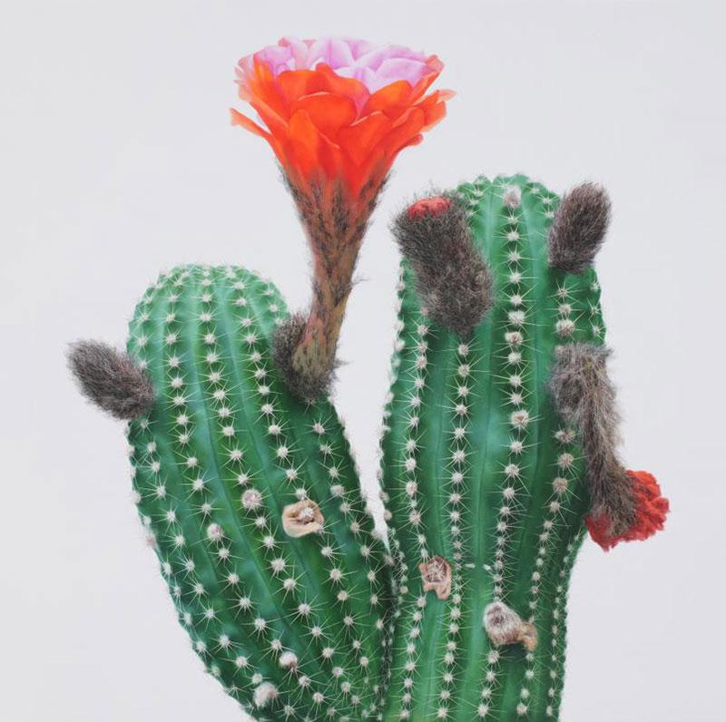 kwang_ho_lee_touch_hyperrealist_cactus_02