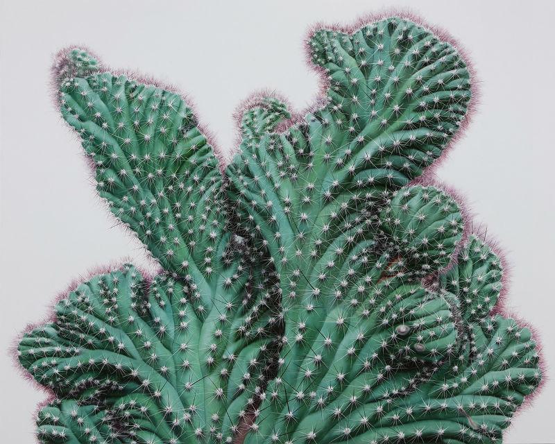 kwang_ho_lee_touch_hyperrealist_cactus_07