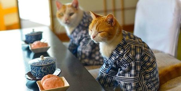 cat-kimono-01