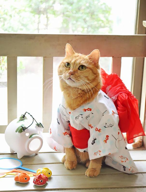 cat-kimono-02