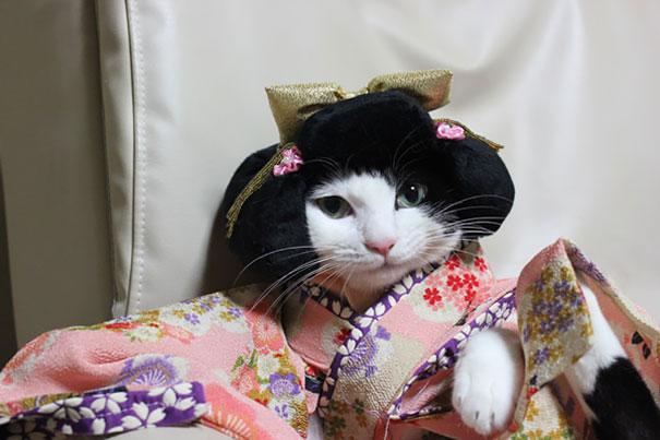 cat-kimono-03