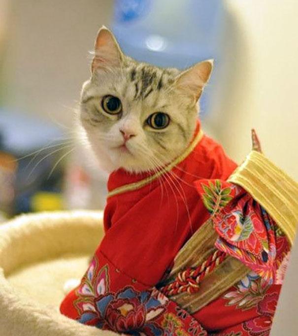 cat-kimono-04
