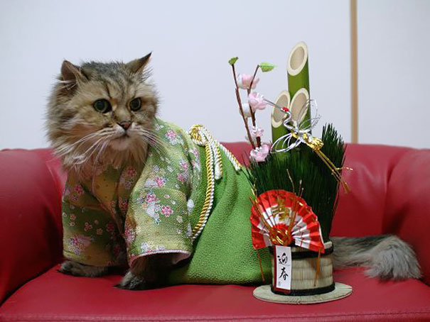 cat-kimono-05