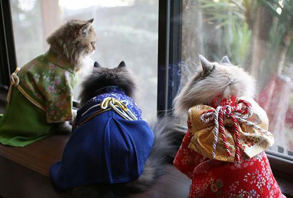 cat-kimono-06