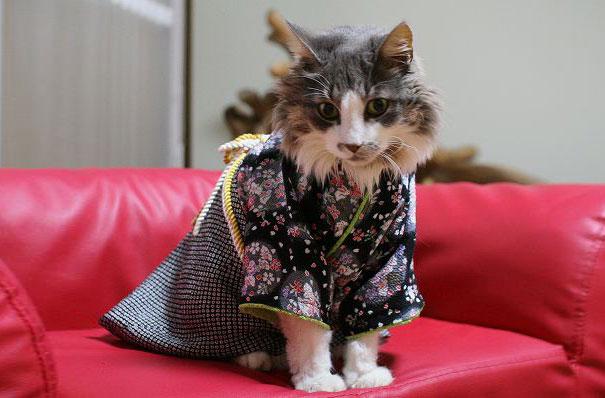 cat-kimono-08