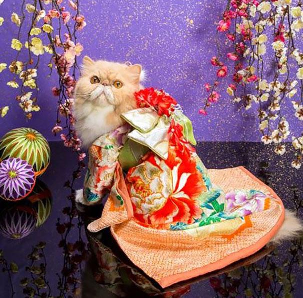 cat-kimono-09