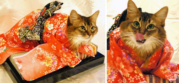 cat-kimono-10