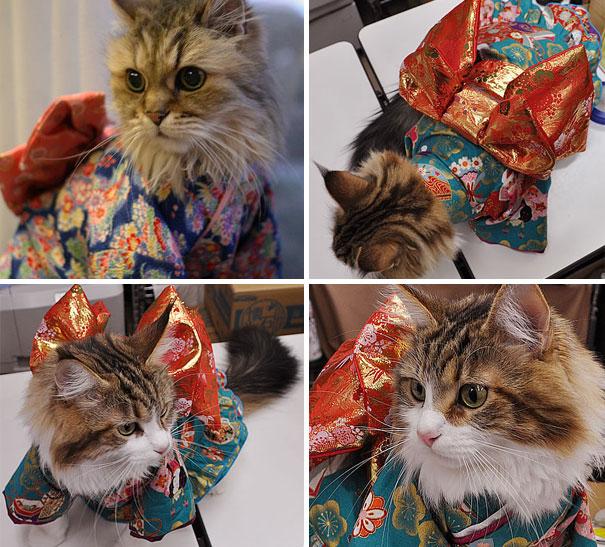 cat-kimono-11
