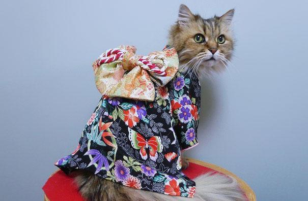 cat-kimono-12