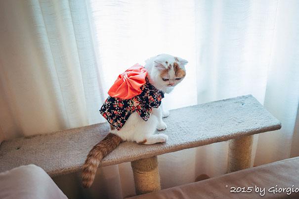 cat-kimono-13