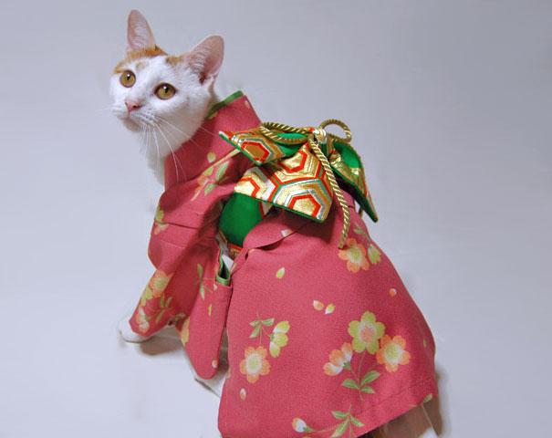 cat-kimono-14