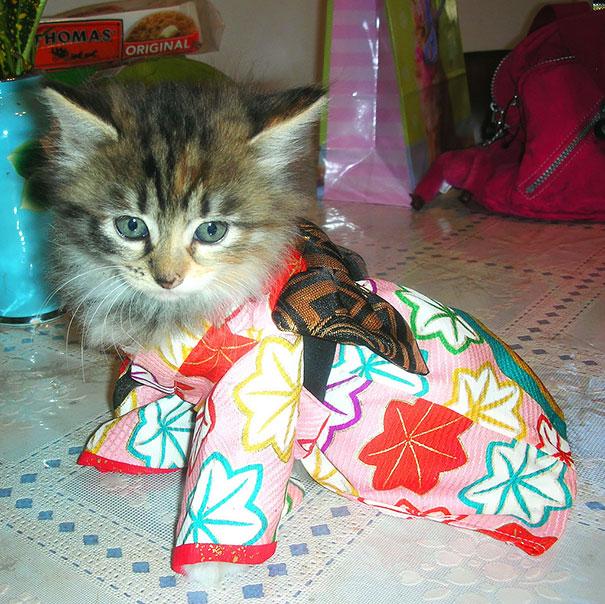 cat-kimono-15