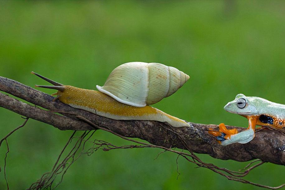 frog-snail-kurito-asheen-01