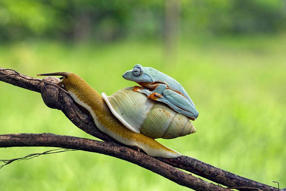 frog-snail-kurito-asheen-02