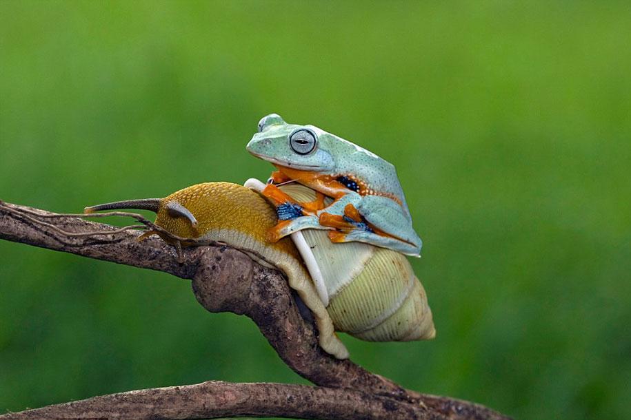 frog-snail-kurito-asheen-03