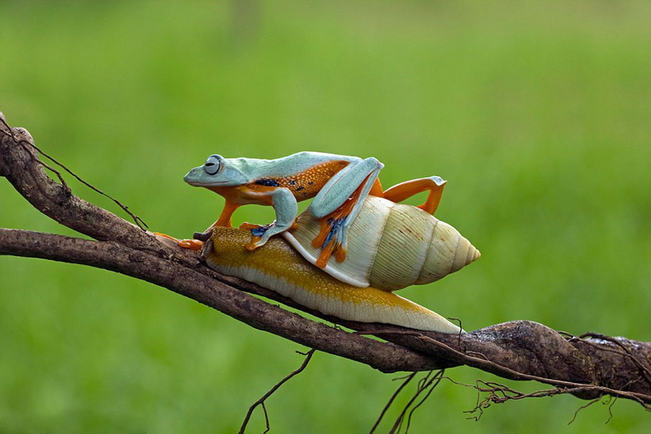 frog-snail-kurito-asheen-04