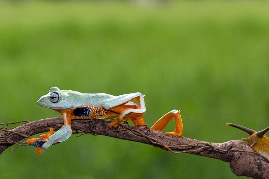 frog-snail-kurito-asheen-05