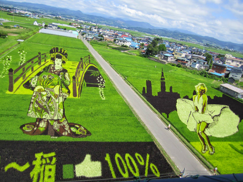 rice_paddy_art_inakadate_05