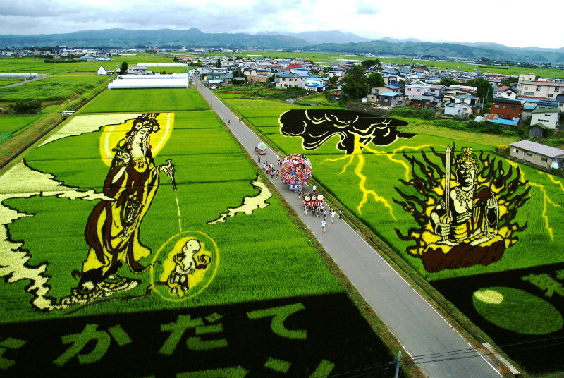 rice_paddy_art_inakadate_06