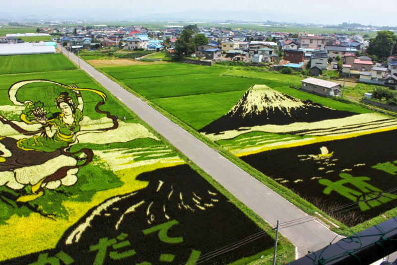 rice_paddy_art_inakadate_10