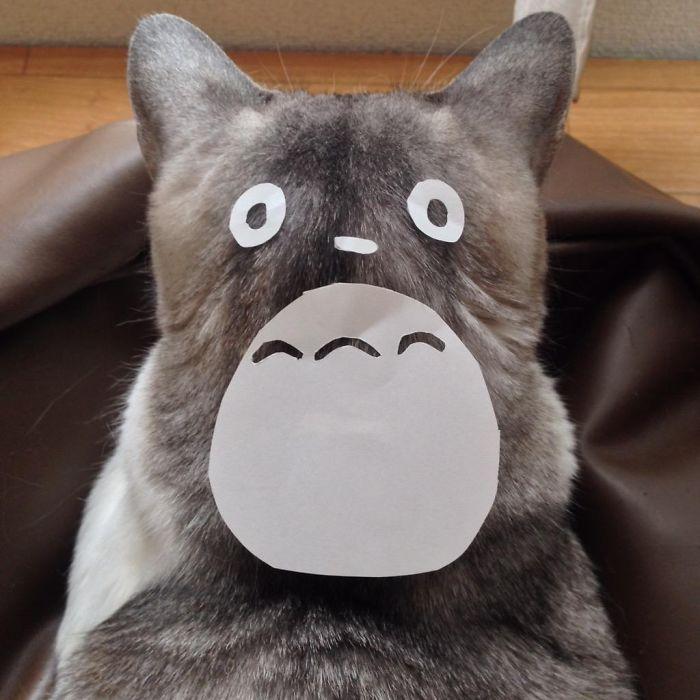 totoro-cats-01
