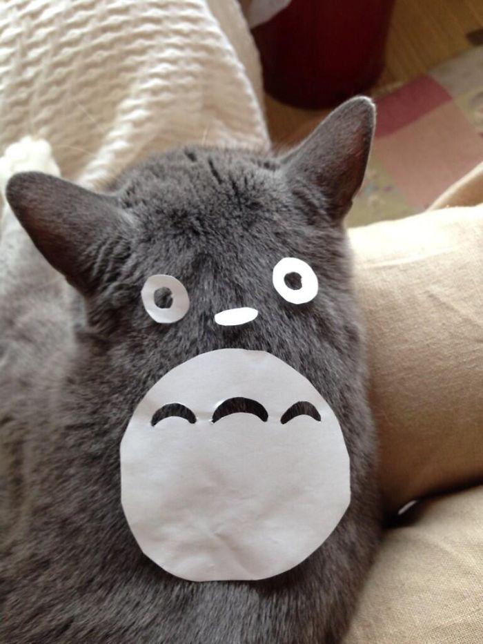 totoro-cats-02