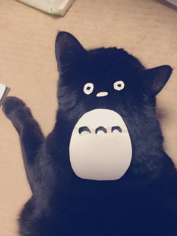 totoro-cats-04