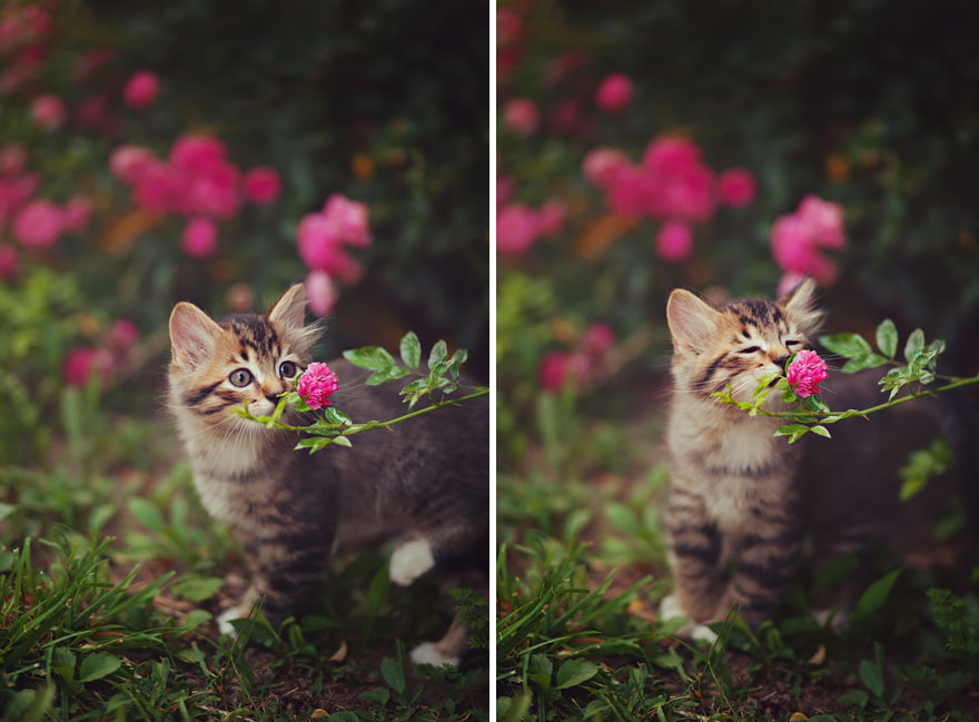 animals-smelling-flowers-02