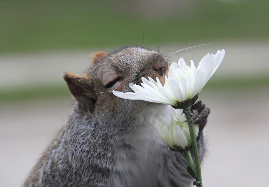animals-smelling-flowers-03