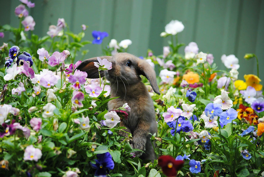 animals-smelling-flowers-04
