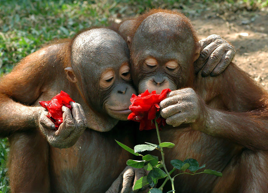 animals-smelling-flowers-06